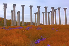 National Capitol Columns at sunset. The Capitol Columns designed as Corinthian columns in the Ellipse Meadow at the National Arboretum, Washington DC Stock Photos