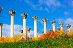 National Capitol Columns surrounded by autumn flowers. Stock Photography