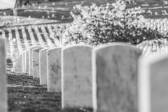 National Cemetery with a flag on Memorial day in Washington,Usa. Stock Photography