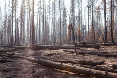 National Creek Complex Fire Stock Photo