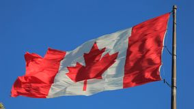 National flag of Canada. The national flag of Canada flying against a blue sky