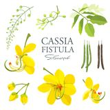 National flower of Thailand, Cassia Fistula, beautiful Yellow Thai flower collections Stock Image
