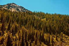 National Forest Stock Images