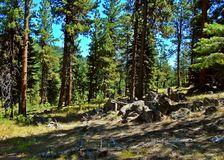 National Forest Rock Pile. Pile of rocks in the ponderosa forest at Wildcat Mtn. near Prineville, OR - Ochoco Mountains - Ochoco National Forest royalty free stock images