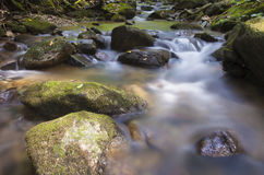 National Forest stream Stock Images