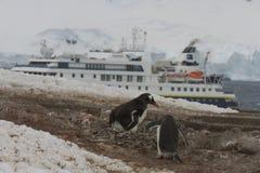 National Geographic ship at Neko Harbor, Antarctica. Neko Harbor, Antarctica - December 11, 2016 :  Gentoo penguins nesting at rookery on Neko Harbor with Royalty Free Stock Image