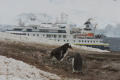 National Geographic ship at Neko Harbor, Antarctica Royalty Free Stock Image