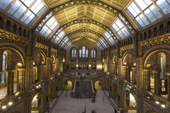 National History Museum. Main hall of the museum.Interior view Royalty Free Stock Photography