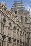 National History Museum, London Royalty Free Stock Photography