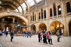 National History museum London Royalty Free Stock Photography