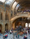 National History Museum Stock Photography