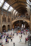 National History Museum, is one of the most favourite museum for families in London. Royalty Free Stock Images