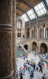 National History Museum, is one of the most favourite museum for families in London. Stock Photography