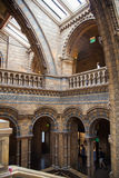 National History Museum, is one of the most favourite museum for families in London. Royalty Free Stock Photo