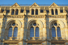 National History Museum: windows details, London. A view of the sculpture decorated facade of the National History Museum in London, United Kingdom, taken in Stock Photos