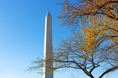 National Monument and tree in autumn foliage in Washington DC, US capital. Stock Images