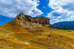 National mountains park Durmitor - Montenegro Royalty Free Stock Photos
