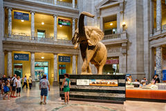 National Museum of Natural History in Washington D.C. Stock Images
