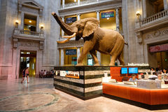 National Museum of Natural History in Washington D.C. Royalty Free Stock Image