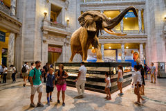 National Museum of Natural History in Washington D.C. Royalty Free Stock Images