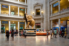 National Museum of Natural History in Washington D.C. Stock Photo