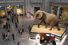 National Museum of Natural History in Washington, DC Royalty Free Stock Images