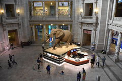 National Museum of Natural History in Washington, DC Stock Images