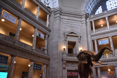 National Museum of Natural History in Washington, DC Royalty Free Stock Photo
