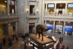 National Museum of Natural History in Washington, DC Royalty Free Stock Photography