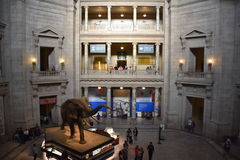 National Museum of Natural History in Washington, DC Stock Image