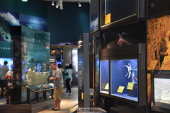 National Museum of Natural History in Washington, DC Stock Photos