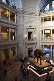 National Museum of Natural History in Washington, DC Royalty Free Stock Photos