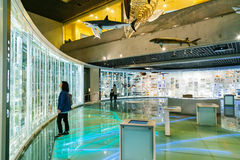 National Museum of Nature and Science in Tokyo, Japan. TOKYO, JAPAN - NOVEMBER 25 2015: National Museum of Nature and Science offers a wide variety of natural royalty free stock photography