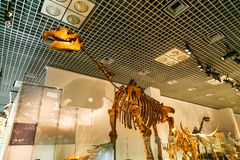 National Museum of Nature and Science in Tokyo, Japan. TOKYO, JAPAN - NOVEMBER 25 2015: National Museum of Nature and Science offers a wide variety of natural royalty free stock images
