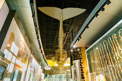 National Museum of Nature and Science in Tokyo, Japan. Tokyo, Japan - November 25 2015: National Museum of Nature and Science offers a wide variety of natural royalty free stock photo