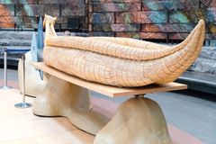 Free National Museum Of The American Indian. Royalty Free Stock Image - 115877986