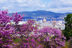 National Palace of Montjuic in spring day. Barcelona Royalty Free Stock Photography