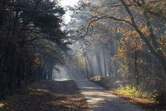 National parc Loonse and Drunense Duinen stock photography