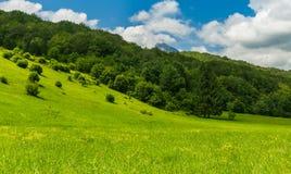 National parc Sutjeska. Beautiful flower field, National parc Sutjeska, Bosnia and Herzegovina with beautiful blue sky Stock Photos