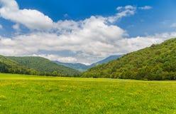 National parc Sutjeska. Beautiful flower field, National parc Sutjeska, Bosnia and Herzegovina with beautiful blue sky Stock Images
