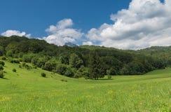 National parc Sutjeska. Beautiful flower field, National parc Sutjeska, Bosnia and Herzegovina with beautiful blue sky Royalty Free Stock Photo