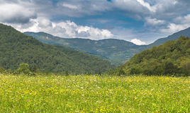 National parc Sutjeska. Beautiful flower field, National parc Sutjeska, Bosnia and Herzegovina with beautiful storm sky Royalty Free Stock Photo