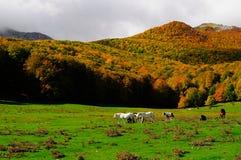National park Abruzzo Lazio Molise. Autumn landscape in the national park Abruzzo Lazio Molise Italy stock images
