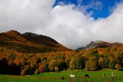 National park Abruzzo Lazio Molise. Autumn landscape in the national park Abruzzo Lazio Molise Italy stock photography