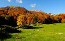 National park Abruzzo Lazio Molise. Autumn landscape in the national park Abruzzo Lazio Molise Italy royalty free stock photos