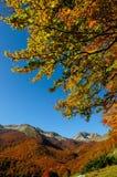 National park Abruzzo Lazio Molise. Autumn landscape in the national park Abruzzo Lazio Molise Italy royalty free stock image