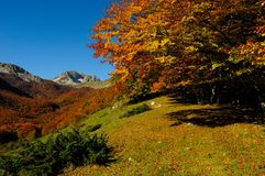 National park Abruzzo Lazio Molise. Autumn landscape in the national park Abruzzo Lazio Molise Italy Royalty Free Stock Photos