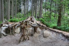 National Park of Adrspach-Teplice rocks. Rock Town Royalty Free Stock Photography