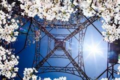 National Park Alishan cherry blossom season, Tainan, Taiwan Stock Image