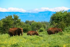 National Park. Amazing nature around the Udawalawe national park Stock Photo